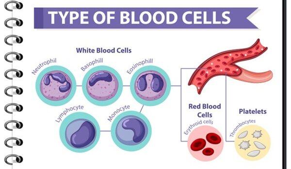 Xét nghiệm công thức máu toàn bộ